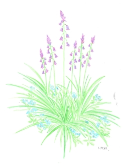 COLOURED PENCILS BLUEBELLS AND FORGET ME NOTS