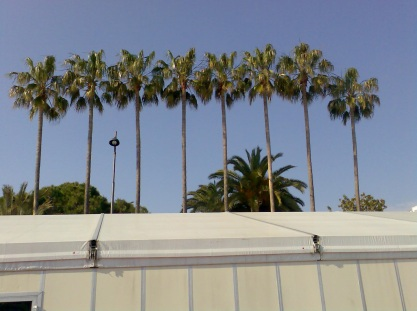 Palm Tree Marquee